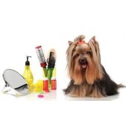 Pet Shampoo & Medicine